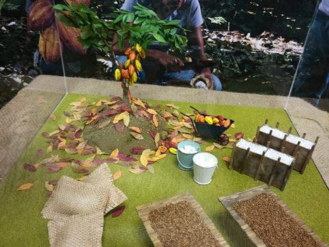 サロン・デュ・ショコラ 明治のカカオ展示
