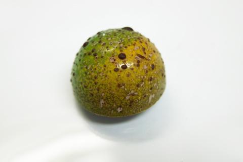 オーバーバイスのフルーツシトロン