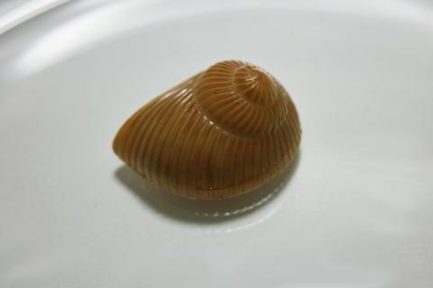 ピエールマルコリーニ(Pierre Marcolini Chocolatier)のエスカルゴ(Escargot)